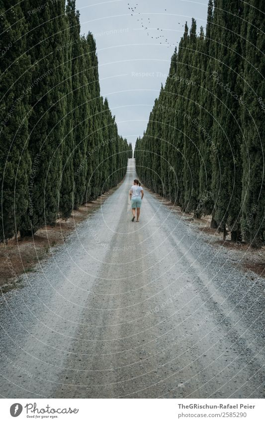 Italy Landscape Gray Green Tuscany Travel photography Avenue Lanes & trails Walking Woman Tree Cypress Gravel Clouds Colour photo Copy Space top