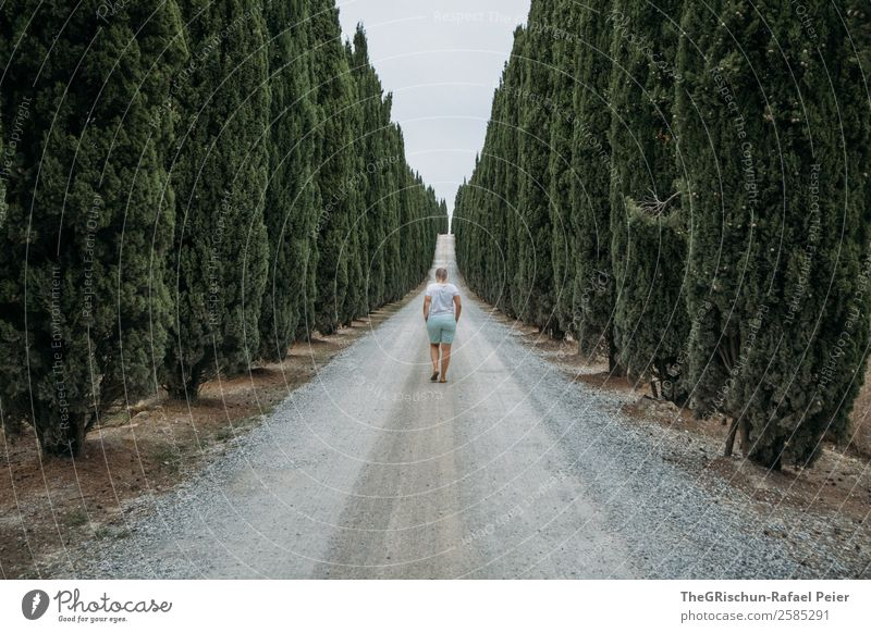Cypress Avenue Landscape Gray Green Tree Perspective Woman Walking Street Future Forward Italy Tuscany Vacation & Travel Travel photography Discover