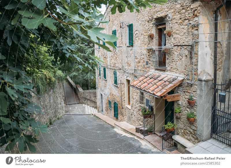 house Village Small Town Brown Gray Green Black House (Residential Structure) Plant Tree Stone Tuscany Travel photography Italy Window Discover Colour photo