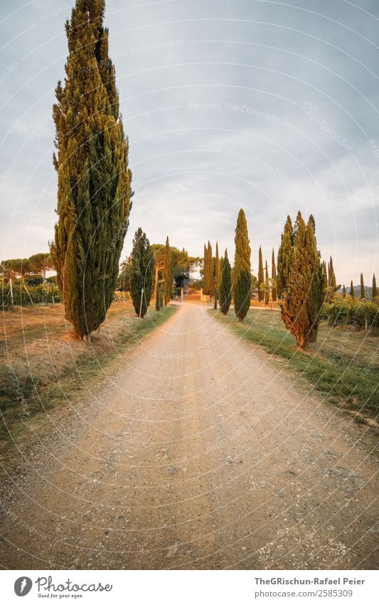 cypresses Nature Landscape Blue Gray Green Italy Characteristic Travel photography Tuscany Cypress Avenue Street Gravel Colour photo Exterior shot Deserted
