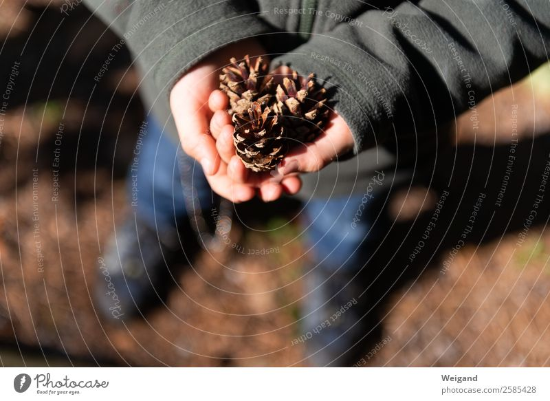 pine cone Vacation & Travel Child 1 - 3 years Toddler 3 - 8 years Infancy Environment Nature Autumn Wood Brown Attentive Collection Forest Experience Cone