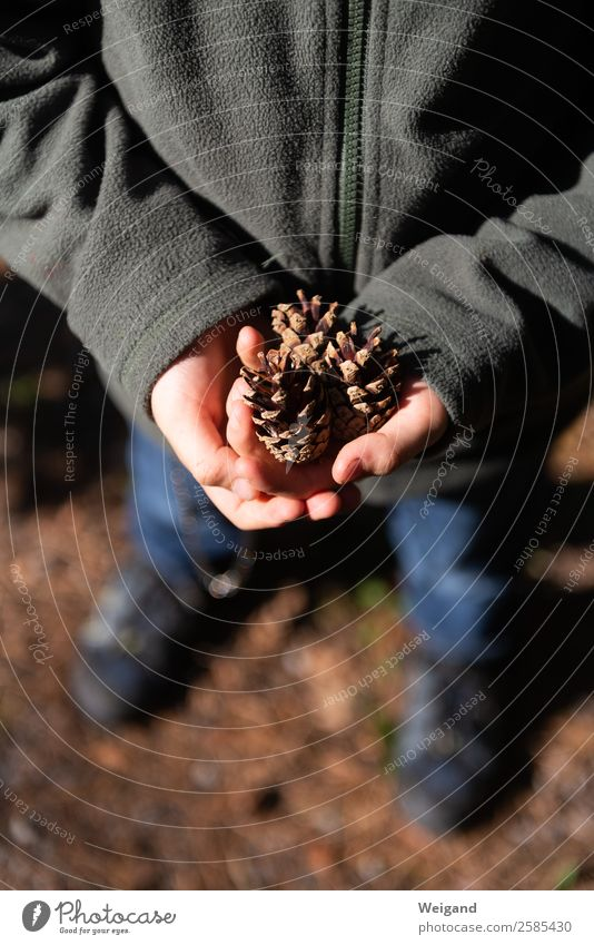 Child Human being Nature Forest Winter Autumn Brown Hiking Park Infancy Select Collection Handicraft Senses Schoolchild Pine cone