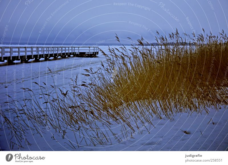 Winter at the Bodden Environment Nature Landscape Plant Ice Frost Snow Grass Coast Lakeside Darss Cold Moody Calm Jetty Footbridge Colour photo Subdued colour