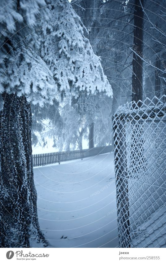 frontiers Nature Winter Ice Frost Snow Tree Forest Deserted Lanes & trails Cold Blue Black White Fence Wire netting fence Tree trunk Colour photo Subdued colour
