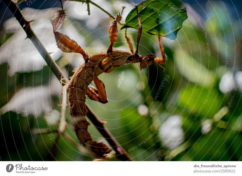 ghost locust Nature Animal Summer Plant Tree Bushes Leaf Foliage plant Wild plant Forest Virgin forest Berlin Germany Europe Wild animal Zoo Aquarium Insect
