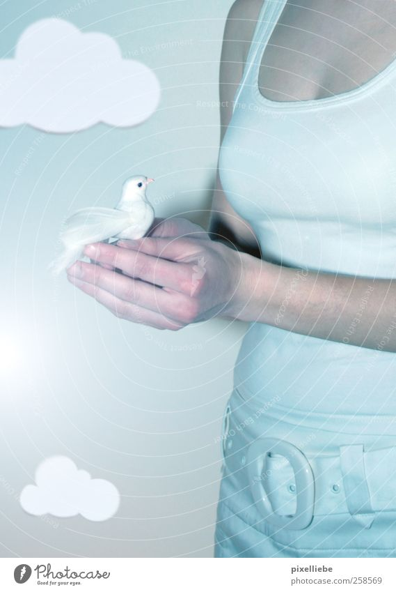 Sky Nature Youth (Young adults) Hand Clouds Feminine Small Air Bright Bird Together Elegant Flying Free Fingers Safety
