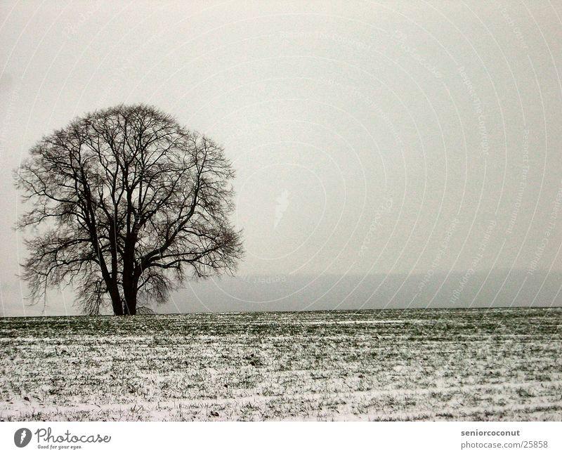 chill Tree Grass Fog Snow