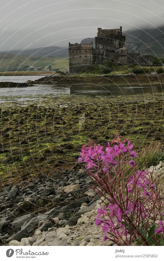 Scotland, Somewhere Architecture Culture Nature Landscape Elements Clouds Bad weather Plant Deserted Castle Ruin Manmade structures Old Power Romance