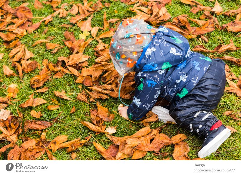 A baby crawling through the autumn leaves in the forest Lifestyle Joy Happy Beautiful Face Child Human being Baby Toddler Infancy 1 0 - 12 months Nature Autumn