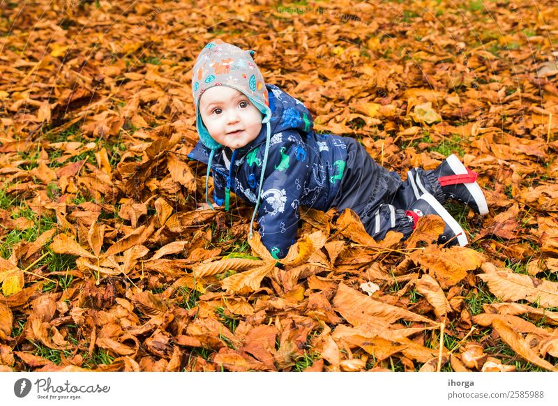 A baby crawling through the autumn leaves in the forest Lifestyle Joy Happy Beautiful Face Child Human being Baby Toddler Infancy 1 1 - 3 years Nature Autumn