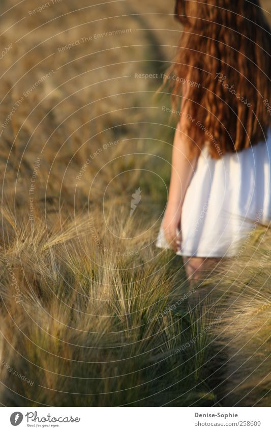 longing Masculine Young woman Youth (Young adults) 13 - 18 years Child Landscape Sun Beautiful weather Field Dress Brunette Long-haired Observe Touch Movement