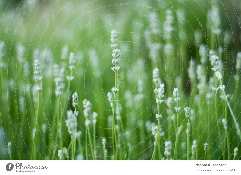 Nature Green White Plant Summer Flower Leaf Calm Meadow Life Grass Warmth Garden Blossom Park Bright