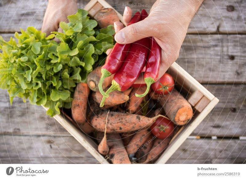 vegetable cistern Food Vegetable Lettuce Salad Nutrition Organic produce Vegetarian diet Healthy Eating Gardening Agriculture Forestry Man Adults Hand Fingers