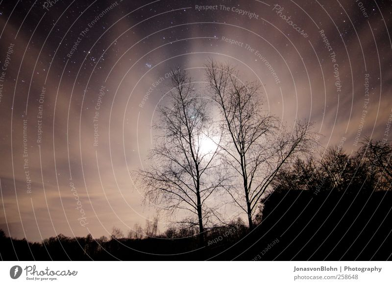 Sky Nature Tree Black Landscape Brown Stars Adventure Hill Beautiful weather Moon Night sky