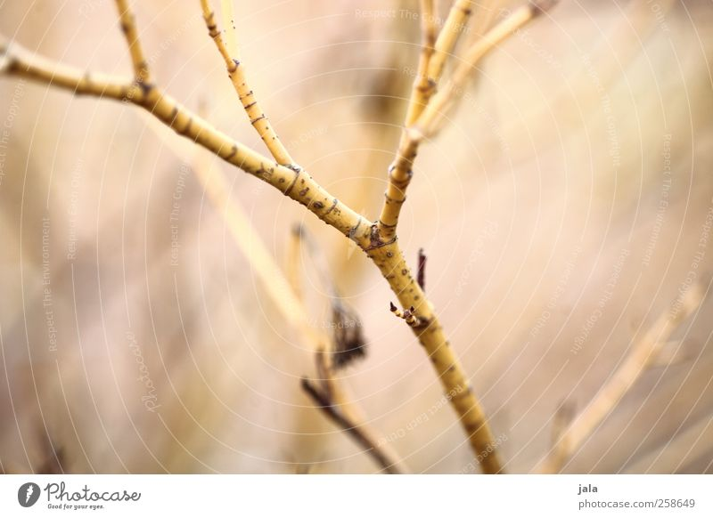 branch Environment Nature Plant Bushes Garden Esthetic Twig Colour photo Exterior shot Deserted Day Shallow depth of field