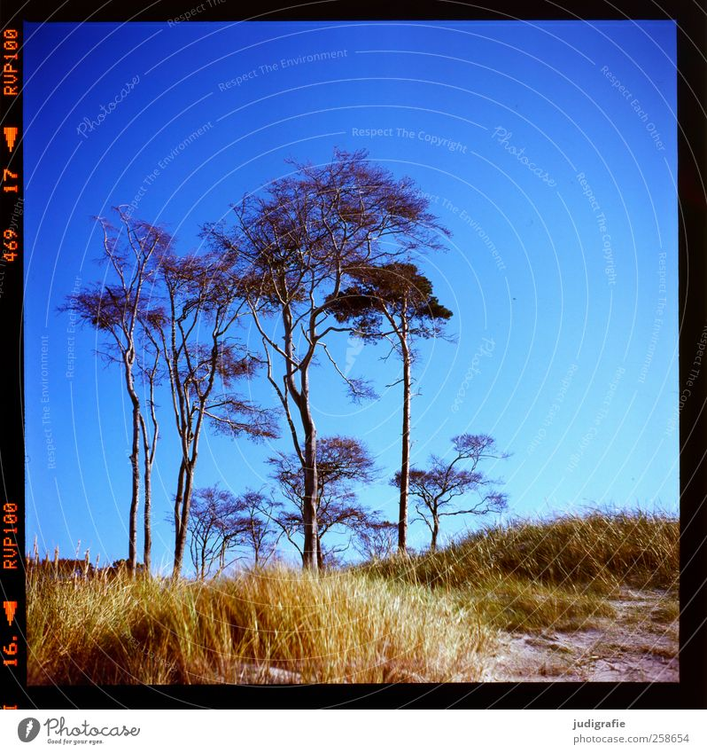 western beach Environment Nature Landscape Plant Sky Cloudless sky Summer Climate Beautiful weather Tree Grass Darss Western Beach Growth Natural Wild