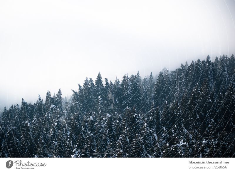 timber line Environment Nature Landscape Elements Clouds Winter Bad weather Fog Snow Tree Forest Hill Alps Mountain Natural Treetop Edge of the forest Fir tree