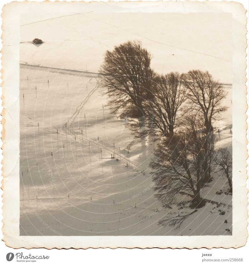 Old White Tree Winter Black Calm Cold Snow Landscape Lanes & trails Field Tall Retro Beautiful weather Past Historic