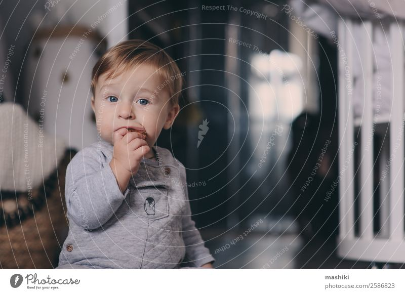 cute happy baby boy eating cookies at home Plate Lifestyle Style Happy Playing Winter Bedroom Child Baby Boy (child) Infancy Warmth Sweater Sit Small Modern