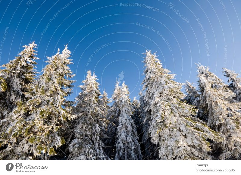 torpor Vacation & Travel Tourism Winter vacation Nature Ice Frost Snow Tree Forest Mountain Beautiful Blue White Idyll Cold Black Forest Colour photo