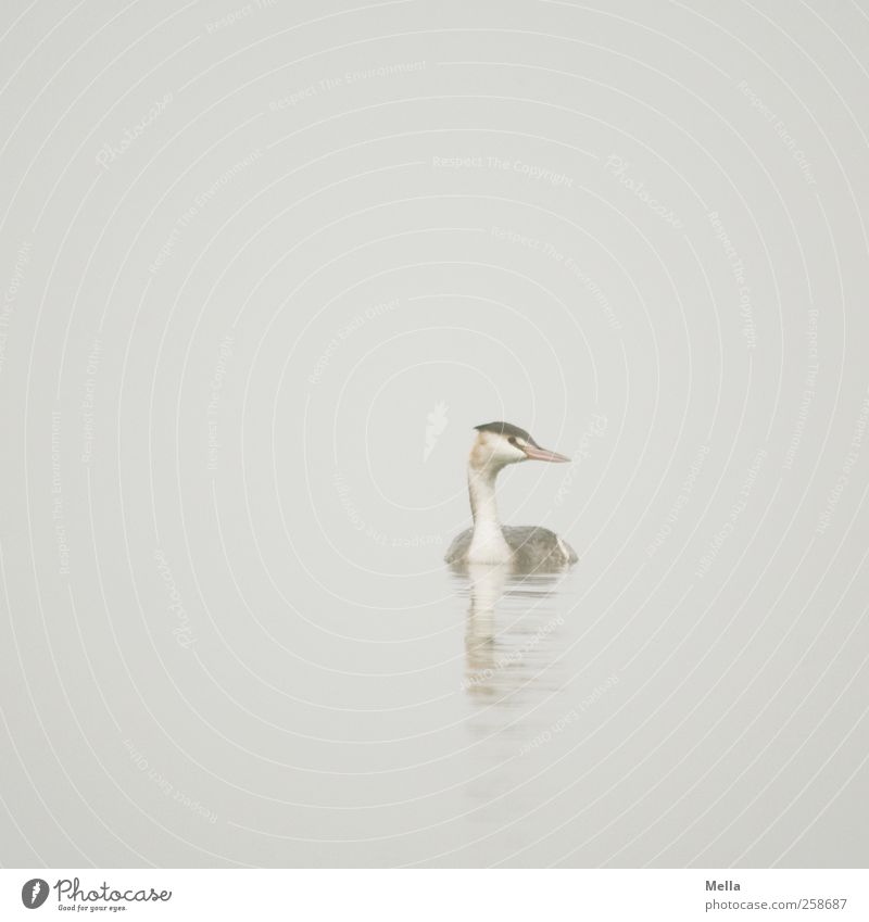 Nature Water Animal Calm Environment Freedom Gray Lake Bright Bird Fog Swimming & Bathing Natural Wild animal Gloomy