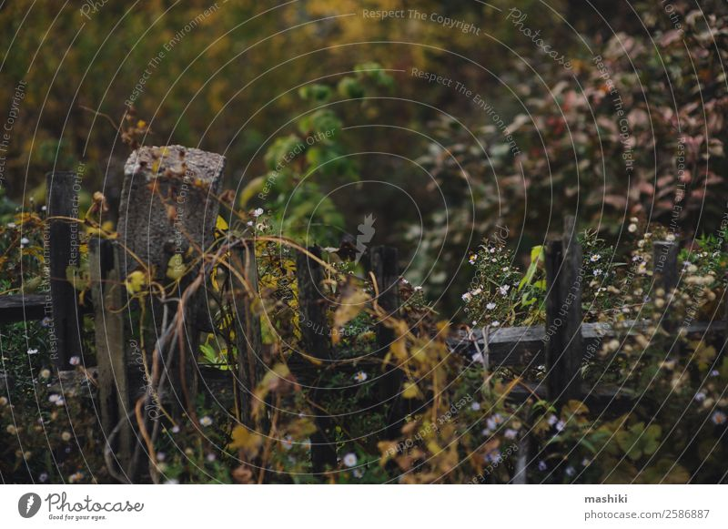 old fence in autumn Vacation & Travel Old Autumn Sadness Natural Freedom Brown Adventure Walking Broken Seasons Fence Wooden board Rustic Rural Country life