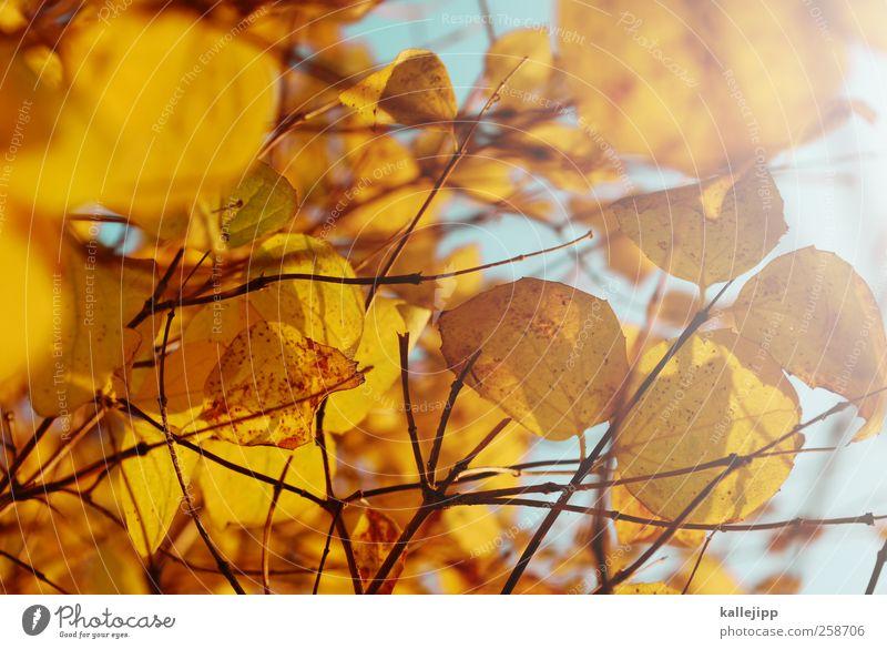 Sky Nature Plant Leaf Animal Environment Yellow Autumn Garden Park Air Gold Cloudless sky Light