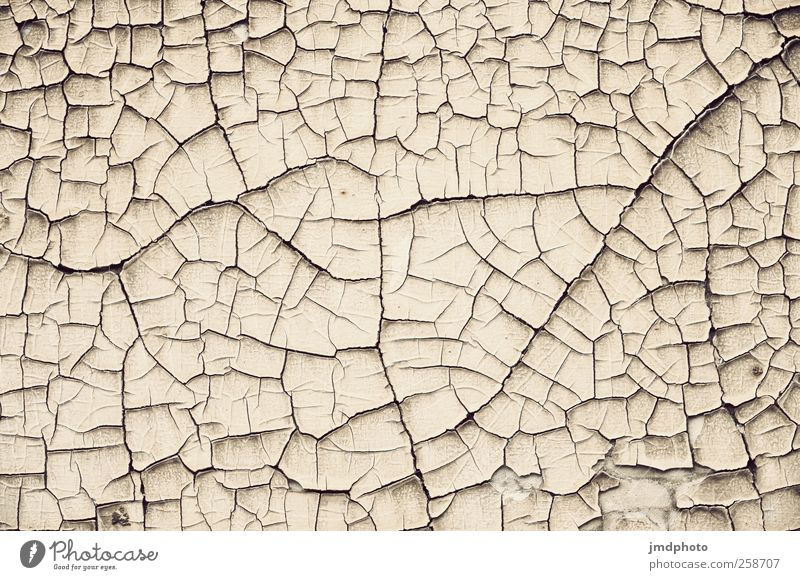 aridity Environment Nature Landscape Earth Drought Desert Gloomy Dry Ground Structures and shapes Shriveled Torn Pattern Subdued colour Exterior shot Detail