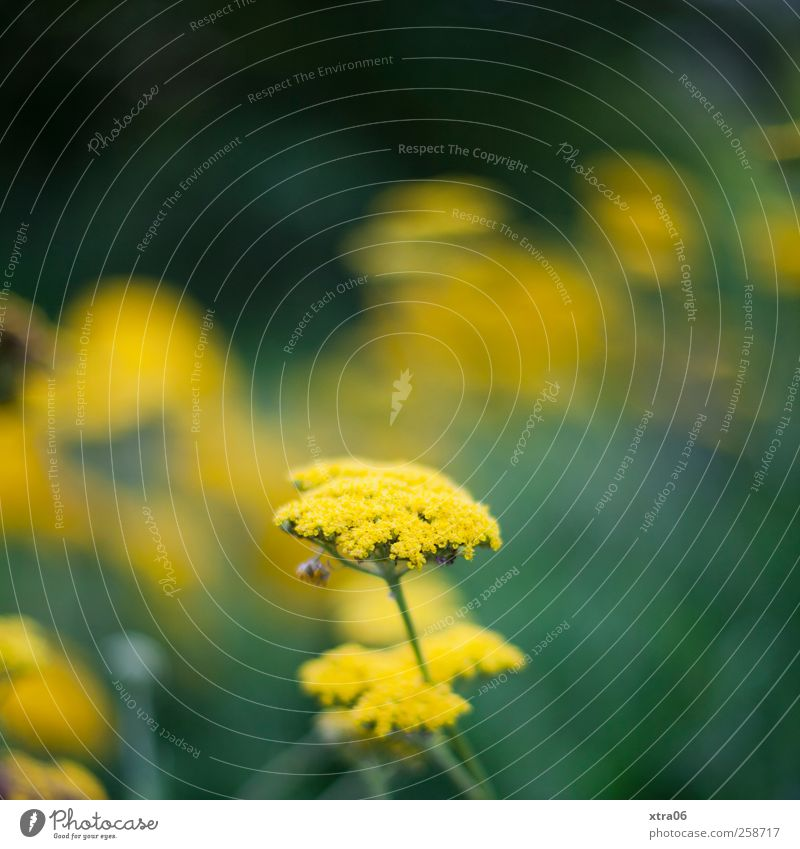 yellowish-green Environment Nature Plant Flower Blossom Yellow Green Colour photo Exterior shot Close-up Copy Space top