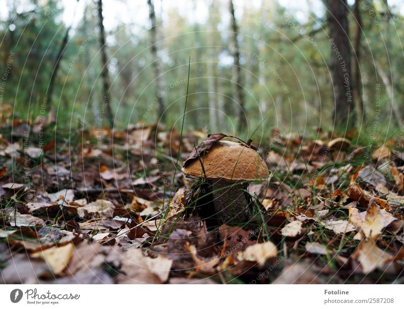 Nature Plant Green Landscape Tree Forest Autumn Environment Natural Brown Fresh Earth Beautiful weather Elements Near Mushroom