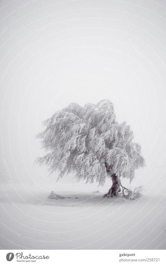 Nature White Tree Plant Vacation & Travel Winter Black Calm Far-off places Cold Snow Environment Landscape Snowfall Moody Weather