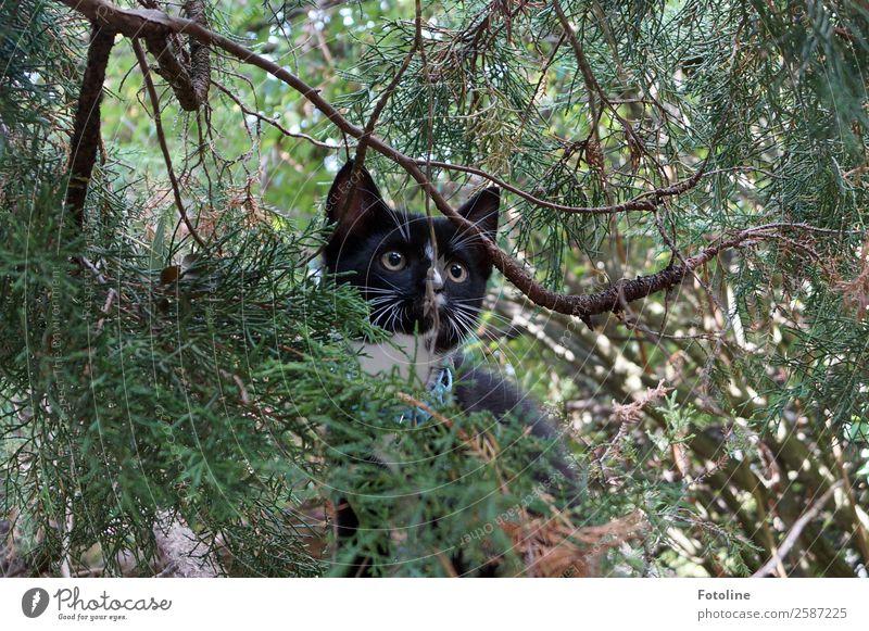 layabout Environment Nature Plant Animal Summer Tree Wild plant Pet Cat Animal face Pelt 1 Brash Free Natural Soft Green Black Climbing Curiosity Eyes Whisker