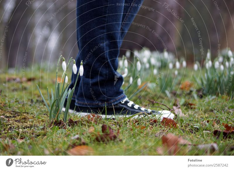 Careful, little snowdrops! Human being 1 Environment Nature Plant Elements Earth Spring Flower Grass Moss Blossom Garden Park Meadow Fresh Near Sustainability