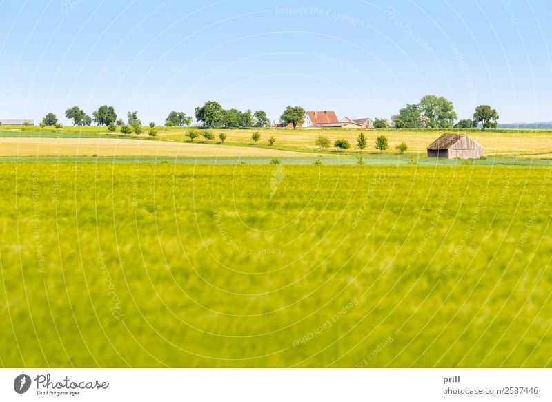 agricultural scenery at spring time Agriculture Forestry Landscape Plant Spring Tree Bushes Meadow Field Growth Sustainability Peaceful Idyll Arable land Row