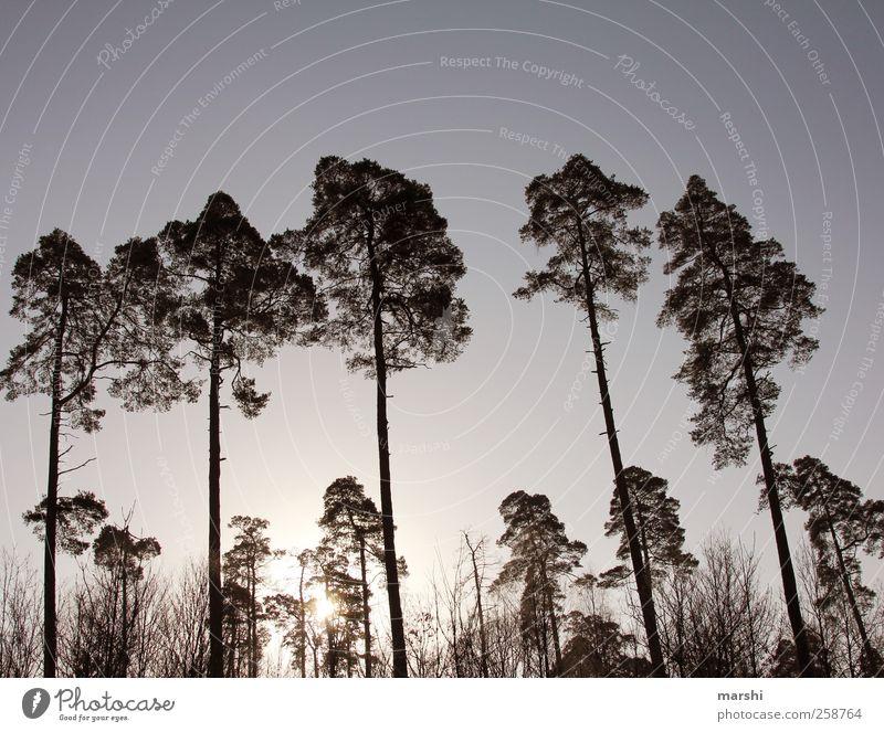 Sky Nature Tree Plant Sun Forest Landscape Large Kitsch Gigantic