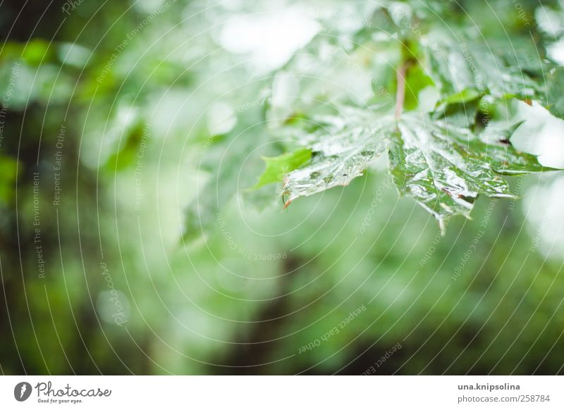 Nature Green Tree Plant Leaf Autumn Environment Moody Rain Glittering Wet Natural Drops of water Idyll Eternity Ease