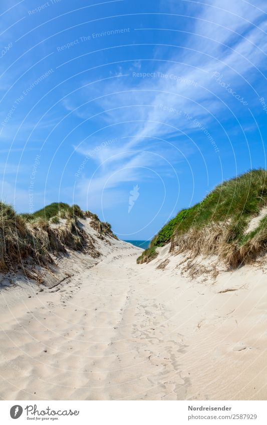 Path between the dunes Vacation & Travel Tourism Camping Summer Summer vacation Sun Beach Ocean Nature Landscape Water Sky Clouds Beautiful weather Grass Coast