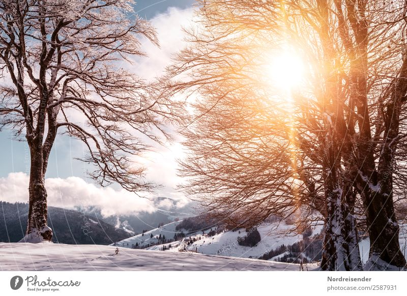 Vacation & Travel Nature Landscape Sun Tree Clouds Winter Mountain Cold Snow Tourism Hiking Park Ice Fog Idyll