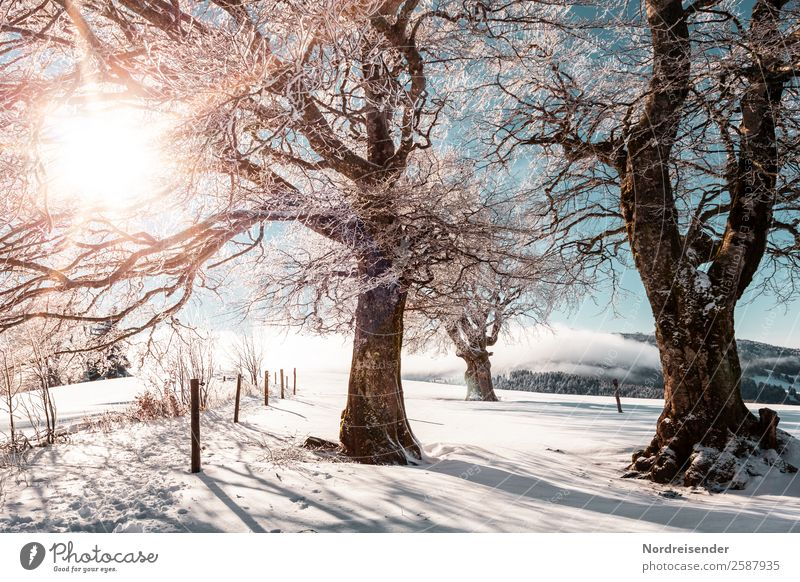 Nature Vacation & Travel Christmas & Advent Landscape Sun Tree Relaxation Winter Life Snow Tourism Trip Hiking Park Ice Idyll