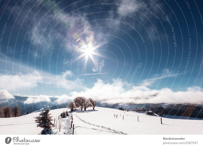 Sky Vacation & Travel Nature Blue Landscape White Sun Tree Clouds Winter Mountain Cold Snow Tourism Ice Glittering