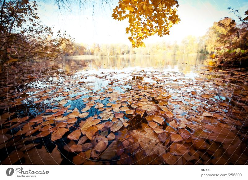 lake view Environment Nature Landscape Plant Autumn Climate Weather Beautiful weather Lakeside Authentic Yellow Water Surface of water Tree Leaf Autumn leaves