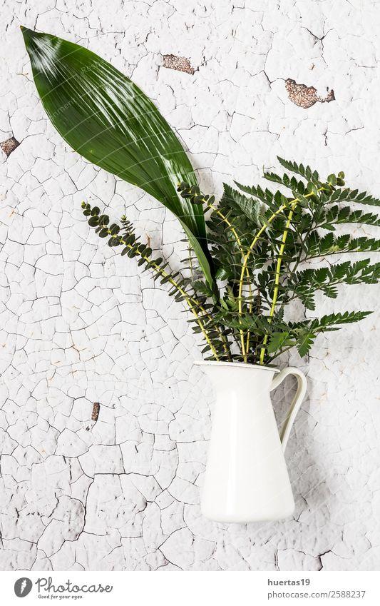 Tropical palm leaf. Elegant Style Design Garden Decoration Plant Flower Natural Above Original Green White Colour background sheet Petalos Floral Framework
