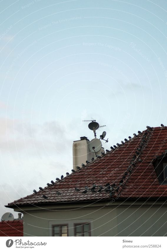 Sky City Calm House (Residential Structure) Bird Sit Wait Flying Roof Beautiful weather Row Chimney Pigeon Antenna Cloudless sky Flock