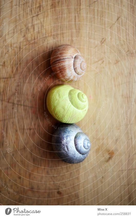 3 Snail Brown Yellow Silver Vineyard snail Snail shell Wood Colour photo Close-up Deserted Bird's-eye view