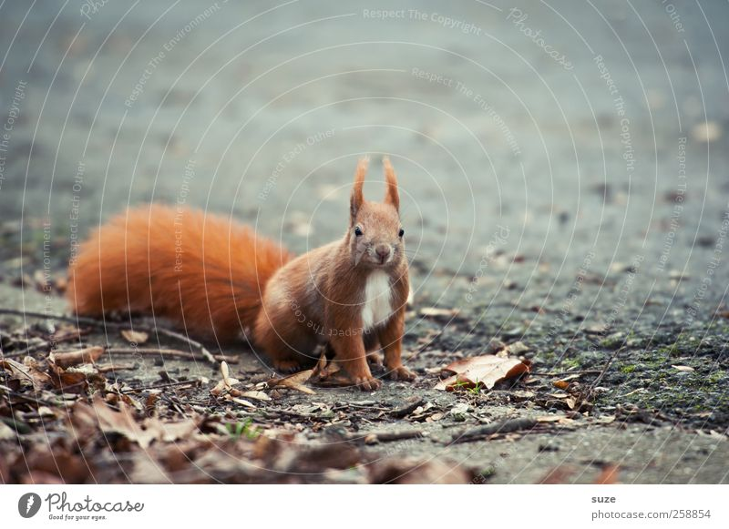 Nature Red Animal Environment Autumn Gray Small Earth Sit Wild animal Wait Cute Ground Curiosity Pelt Animalistic