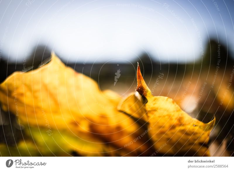 Nature Leaf Forest Autumn Yellow Emotions Moody Contentment Field Power Optimism