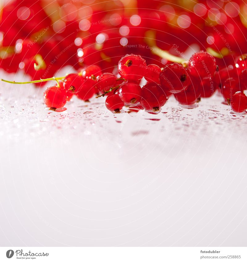 berry season Fruit Organic produce Slow food To enjoy Healthy Delicious Red Esthetic Uniqueness Colour photo Studio shot Copy Space bottom
