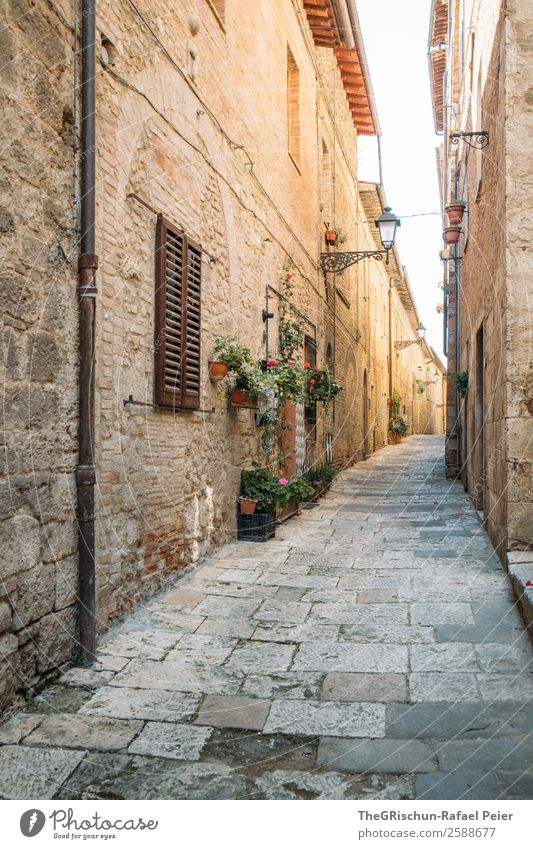 gas Village Old Italy Tuscany Travel photography Narrow Alley Light Shadow Vacation & Travel Discover Wall (barrier) Stone floor Colour photo Exterior shot