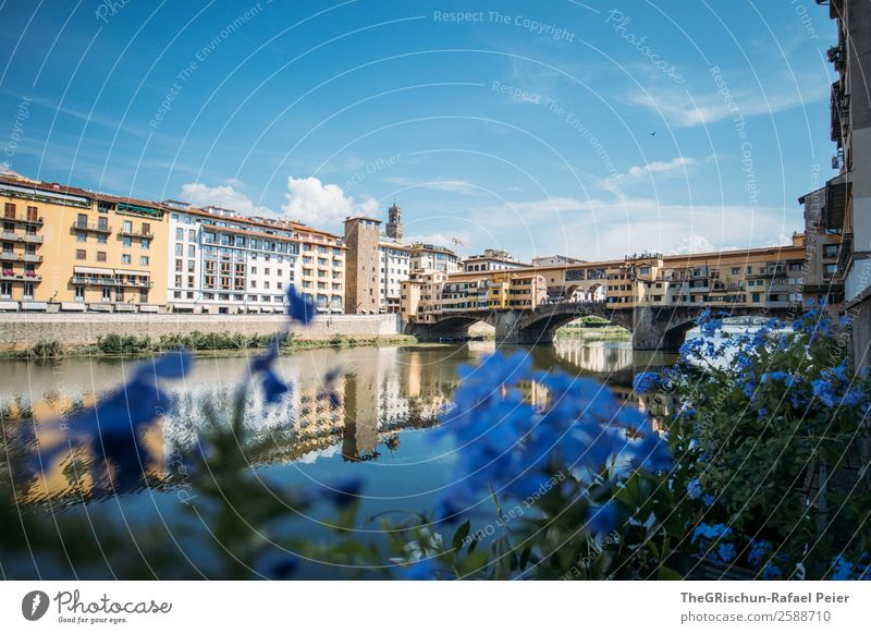 Florence Town Blue Tourism Flower Water Reflection Bridge Valued To go for a walk Clouds Building Italy Vacation & Travel Colour photo Exterior shot Deserted