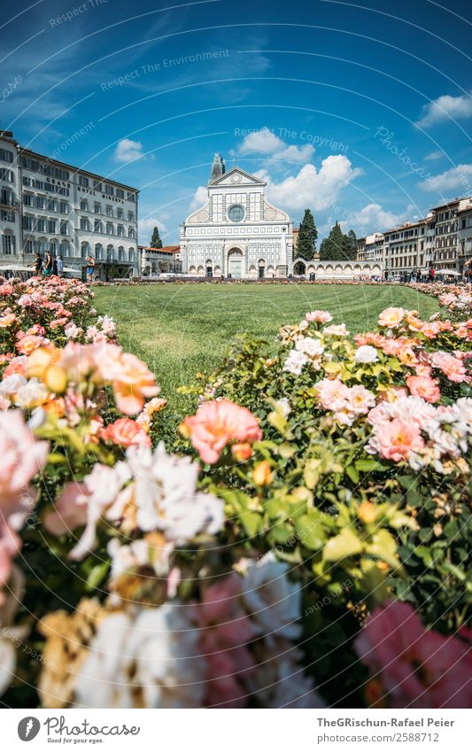 Florence Nature Blue Church Religion and faith Italy Travel photography Town Tourism Rose Flower Shadow Clouds Vacation & Travel To go for a walk Sunbeam Warmth